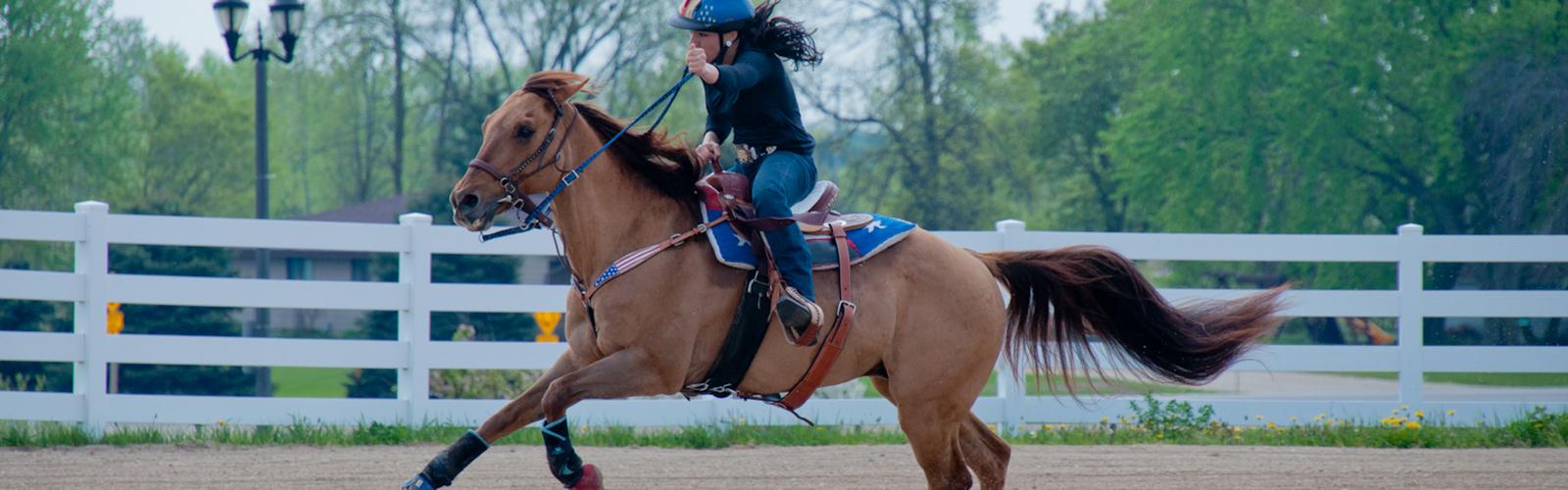 Header image for Equine