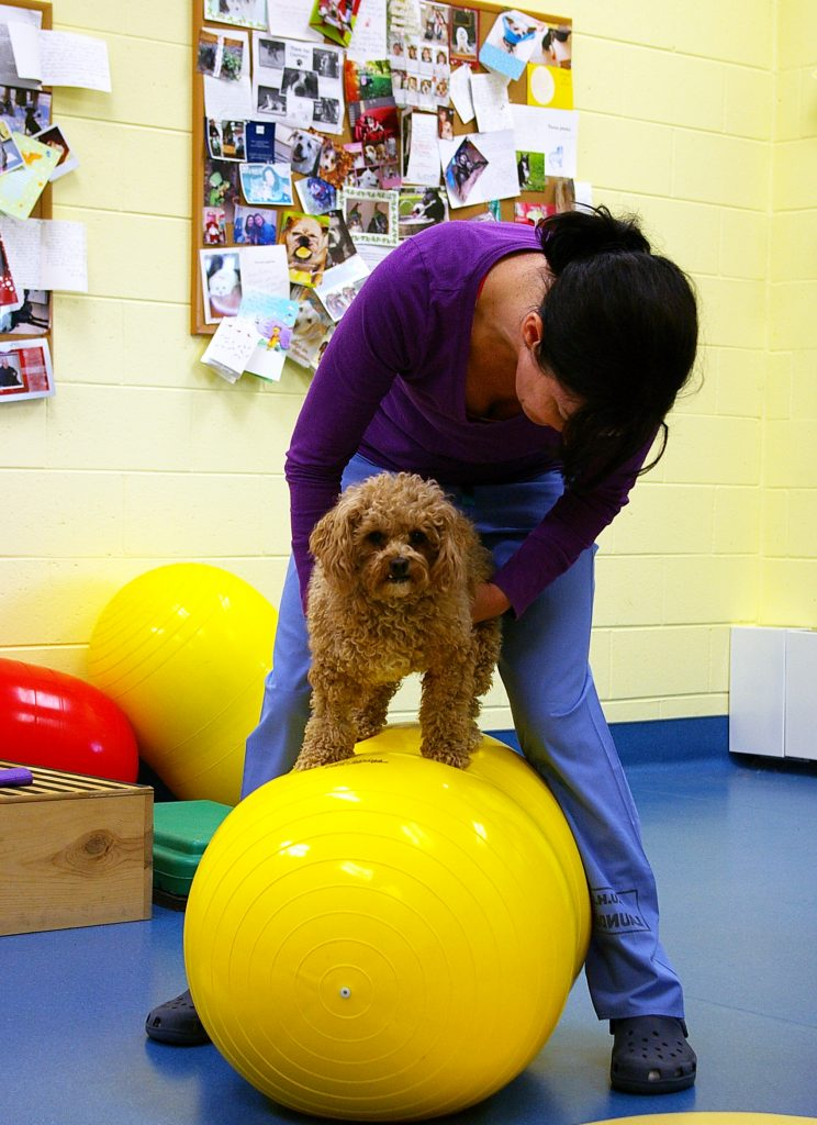 Dog Therapy Ball