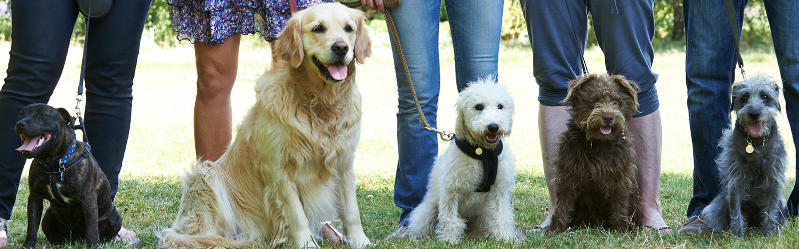 Header image for Vaccination Against Canine Cancer Study